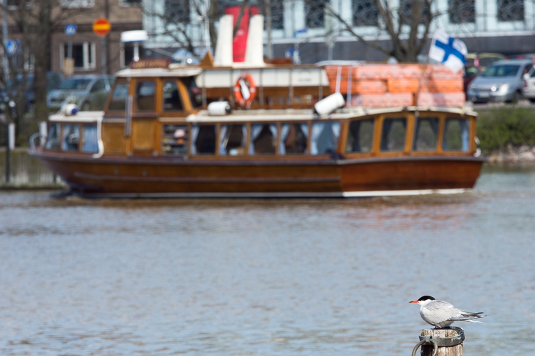 zooboat