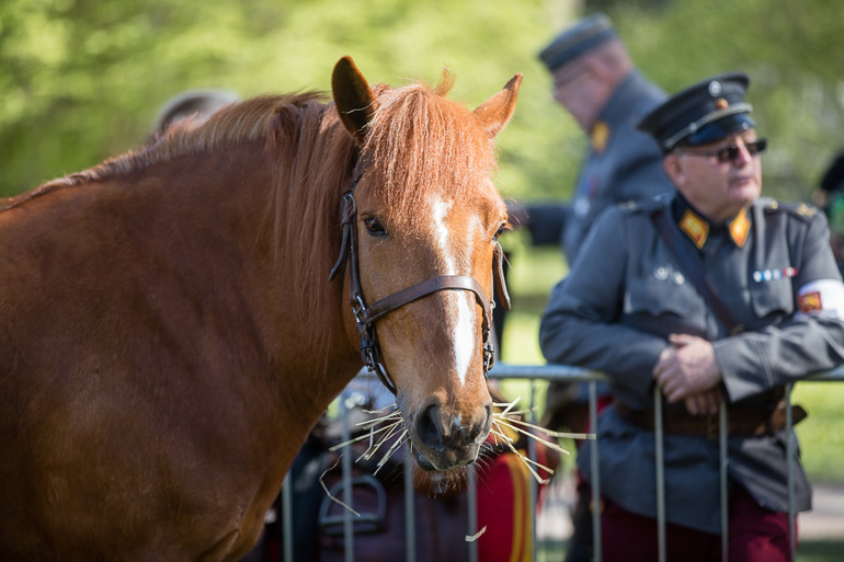 hevosetkaivarissa-3